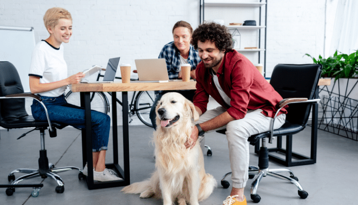 Office Cleaning: How Should I Clean My Pet-Friendly Office?